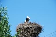 Абсолютно у каждого дома в деревеньке есть гнездо с этими благородными птицами.