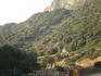 Восточные склоны,заросли оливковых деревьев.