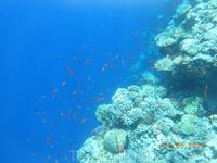 Голубая лагуна. А вот и небольшая стая рыбок