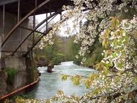 Весна на Рице