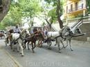 Основное средство передвижения на Большом Острове, также есть возможность использовать велосипеды и собственные ноги)))