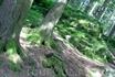 Мох в дремучем лесу потрясающе свеж и зелен