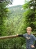 Баварские леса