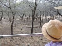 И прокатились на грузовике по парку где паслись носороги