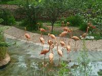 фламинго...