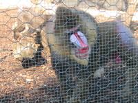 рядом с нашим отелем находился парк, в котором распологался зоопарк и вилла де Боргеза.
