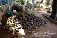 Груда кокосов лежит в блаженной неге...