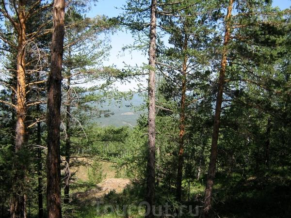 На вершине тоже лес.