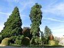 В этом сквере растут огромные деревья, тоже уникальные и охраняемые государством.