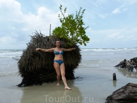 Корень пальмы