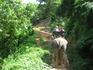 катание на слонах