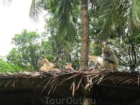 на входе о.обезьян - встречают туристов
