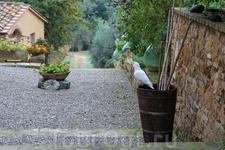 У хозяев нашего агритуризма жили голуби