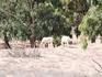 Еще антилопы