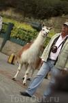 Лама - самое доброе животное в мире