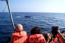 в открытом море наблюдаем семью китов!