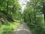 На таких тропах вспоминаются песни из летних лагерей и школьных походов