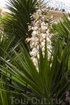 А в нём пальма цветёт.