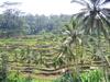 Остров Бали.Февраль 2014
