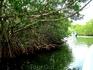 мангровые леса не только фильтруют морскую воду.. это так же своего рода барьер против сильных волн (в т.ч. цунами)... такие леса остановят мощь волны ...
