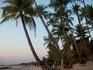 пальмы!!