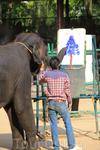 там слоны рисуют