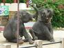 Шоу слоников в зоопарке-2