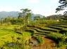 Рисовые поля, Индонезия, БАЛИ