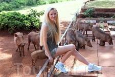 В Найроби я посетила удивительный отель-питомник, где обитают жирафы и бородавочники.