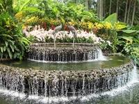 фонтан напротив входа в Сад орхидей
