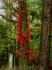 красный вьюн висит повсюду, как траурные венки, развешенные природой в память о произошедшем