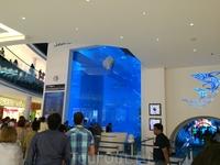 Этот аквариум не просто большой, а ОООчень большой, прямо АААгроменный – аж в пять этажофффф!!!))) И, кстати, мне очень повезло!!! Электрическая гроза ...