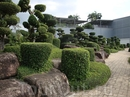 Сад бонсай.