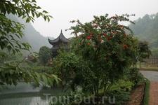 Везде в Китае цветет гранат.
