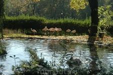 В лучах солнца - розовые фламинго