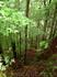 Немецко-австрийский лес