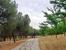 Как я говорила, часть парка больше похожа лес с аккуратными дорожками. Очень чистый воздух, пропитанный запахами сосны, трав, лаванды и солнца.