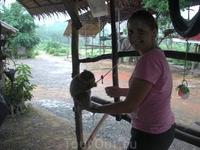 обезьянка грызет ананнас