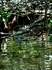 а вот и Испанский КОКОДРИЛЛО)))  мы нашли только одного, небольшого...но т.к. впервые видели крокодила вне фермы...было радостно)