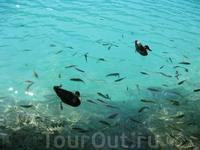 Рыбы в озерах также - масса. Именуется калифорнийской форелью. Попрошайка, а не рыба. Не забудьте взять для не побольше хлеба.
