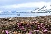 Цветущая Арктика
