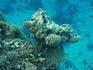 После 50 метров коралла отеля - глубина метров 15.