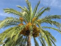 О какая пальмочка! Пляж Магалуф
