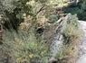 Экзотические растения горного Крита