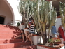 Такие огромные кактусы росли на территории нашего отеля