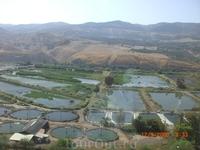 Крокодилья ферма возле Хамат Гадера...