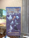 The Los Angeles Pigeon's Club's 100th Anniversary Show, Riverside, Ca.