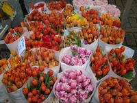 Цветочный рынок. Если будите покупать там луковицы тюльпанов или др. цветы, будте внимательными и берите луковицы штучно. Мы взяли упаковкой и они оказались ...