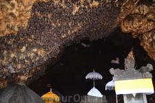 Пещера летучих мышей.