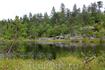 К вершине горы мы пробирались по узким тропам сквозь деревья, иногда шли по болотам.